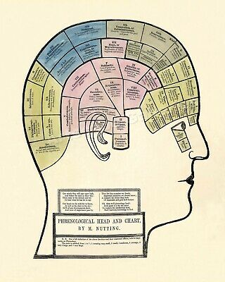 1857 Phrenology Nutting Medical Head Chart Poster 16x20