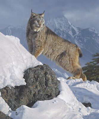 WILDLIFE ART PRINT Austere Ascent (Lynx) by Daniel Smith Cougar Cat Poster 24x20