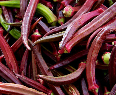 OKRA 'Burgundy' 25+ seeds unusual RED vegetable garden gumbo HOT CLIMATES spring
