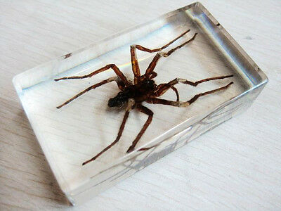 Cool Spider King Lucid Paperweight Book Town