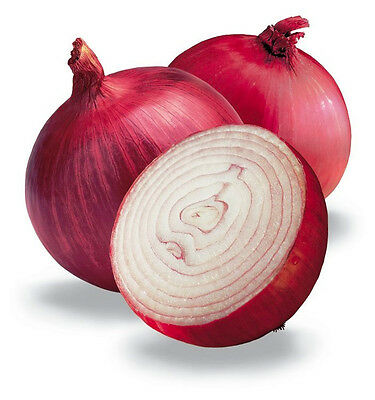 ONION 'Red Burgundy' 100 seeds HEIRLOOM vegetable garden WINTER season veggie