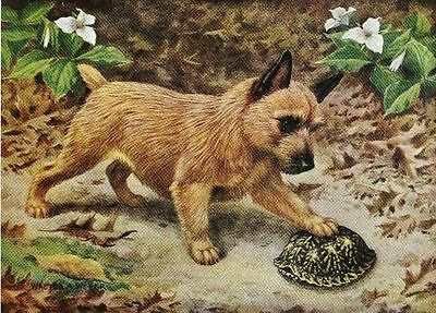 Norwich Terrier - Vintage Color Dog Print - MATTED