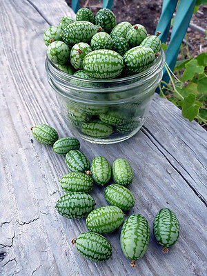 Vegetable  Cucamelon  600 Finest Seeds  Bulk