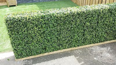 Best Artificial Premium 171 Stems Boxwood Topiary Side Mats Hedging Screening