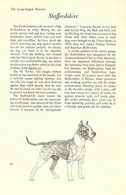 """The Staffordshire Bull Terrier - Vintage Dog Art Print - Matted """"G"""""""