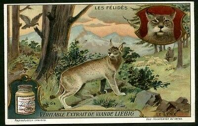 Wild Lynx In The Forest - Big Cats c1910 Card