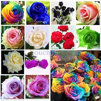 100x Color rare Rose Seed Seeds For Your Lover Petal Plants Home Garden