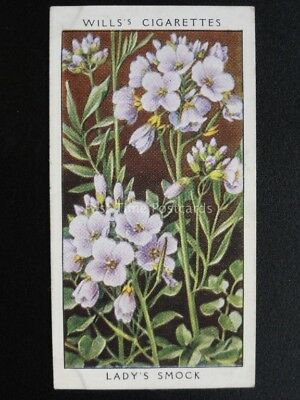 No.19 LADYS SMOCK CUCKOO FLOWER - Wild Flowers (Adhesive) - W.D.& H.O.Wills 1936