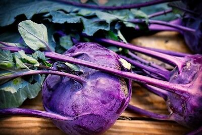 KOHL RABI 'Purple Vienna' 150+ seeds vegetable garden winter UNUSUAL kohlrabi