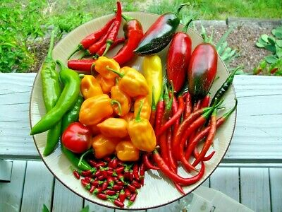 CHILLI 'Mixed' 30+ seeds all types vegetable garden Hot Mild chili HEIRLOOM