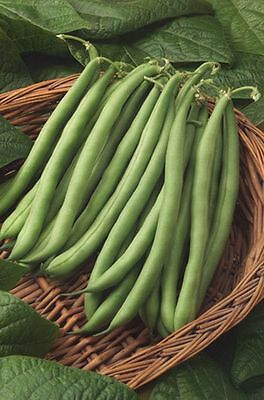Vegetable  Climbing French Bean  Blue Lake  120 Seeds ** Free Uk P&p**