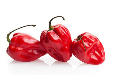 CHILLI 'Habanero' 20 seeds SUPER HOT heirloom vegetable garden chili pepper
