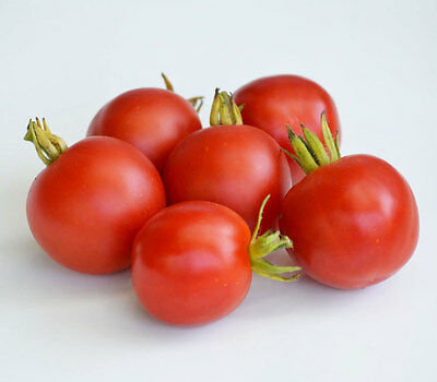 Vegetable Tomato Outdoor Girl 125 Finest Seeds Early Maturing
