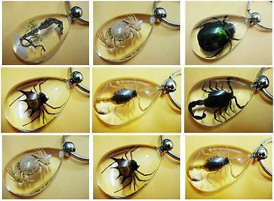 wholesale 9pcs insect design real spider&scorpion mix Xmas gift drop key-chains