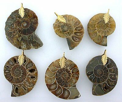 ONE 1 1/2 to 1 9/10 Inch Ammonite Gold Plated Pendant Focal Gem Natural ebs6544