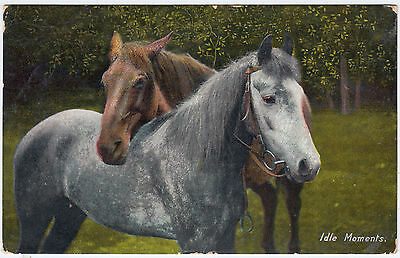 IDLE MOMENTS - Two Horses - Wildt & Kray  - 1907  used postcard