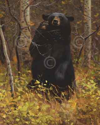 BEAR ART PRINT - Like a Moth to a Flame by Kyle Sims 16x20 Wildlife Poster