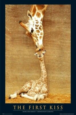 ANIMAL POSTER ~ GIRAFFE FIRST KISS 24x36 Mother & Child Calf Mammal Animals