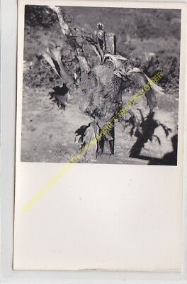 RPPC carte photo MADAGASCAR  n6