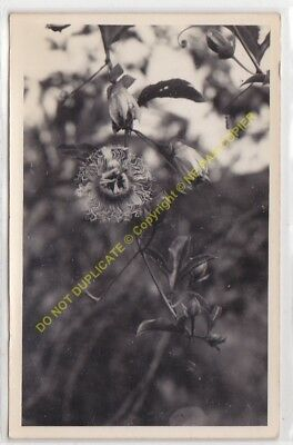 RPPC carte photo MADAGASCAR n41