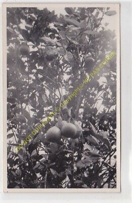RPPC carte photo MADAGASCAR n50