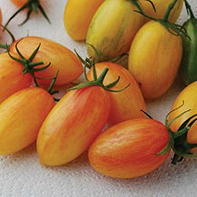 Vegetable Tomato Cherry Artisan Blush Tiger 10 Finest Seeds