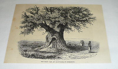 1878 magazine engraving ~ THE MARY OAK AT ALOUVILLE ~ Normandy
