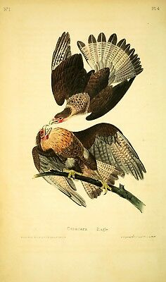 Cara Cara Eagle by John J. Audubon Giclee Print Repro on Canvas