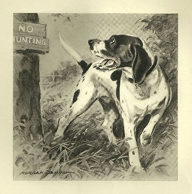 Pointer - Vintage Dog Print - 1947 Morgan Dennis