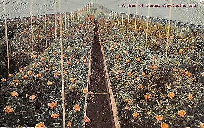 A Bed of Roses, Newcastle, Indiana Antique Postcard (T1523)