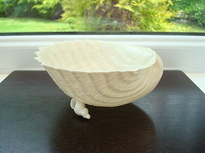 Belleek Large Cardium Shell Bowl withTwin Shell Supports 1891-1926  2nd Black