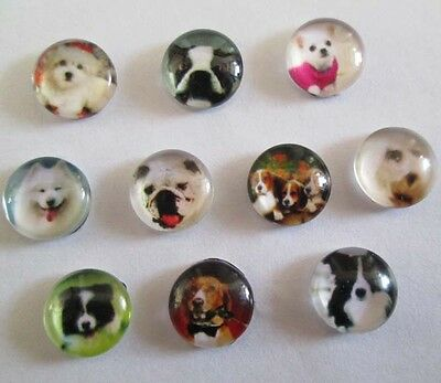 Mixed style dog 10PCS floating charm DIY for glass living memory locket #0123