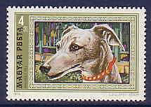 Dogs Whippet Magyar MNH stamp 1972