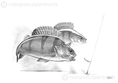Drop Shotting For Perch Pencil Drawing Fishing Print Direct From Artist Signed