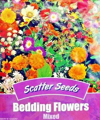 Scatter Seeds Bedding Flowers Mixed Easy To Sow 200 High Quality Flower Seeds