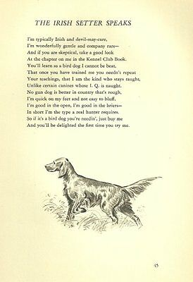 Irish Setter Illustration and Poem - 1947 M. Dennis