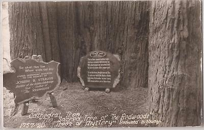 Trees of Mystery California Real Photo RPPC Postcard CATHEDRAL TREE Base & Signs