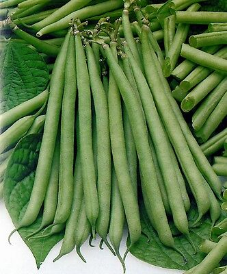 Vegetable  Dwarf French Bean  Slenderette  200 Seeds