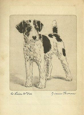 Wire Fox Terrier - Vintage Dog Print - 1936 Diana Thorne