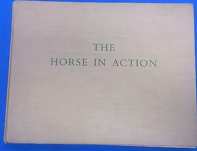 THE HORSE IN ACTION by   Henry Wynmalen (1954) A.S. Barnes illustrated HC