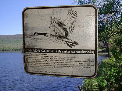 CANADA GOOSE Wilderness Information Wood Sign Vintage