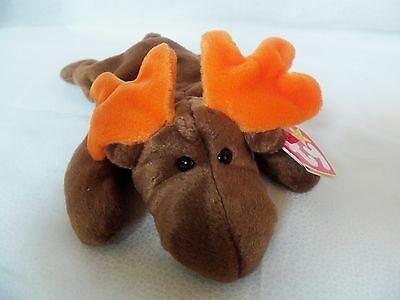 "TY Beanie Babies 8"" Moose  ** CHOCOLATE **  5th Gen New w/ Tag"