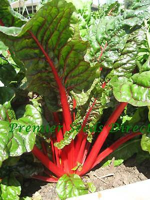 Organic  Vegetable  Swiss Chard Rhubarb  200 Seeds