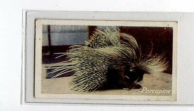 (Jb1777-100)  JACOBS,ZOO SERIES(BROWN),THE PORCUPINE,1924#23