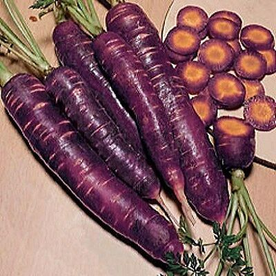 Vegetable  Carrot Purple Dragon  500 Finest Seeds