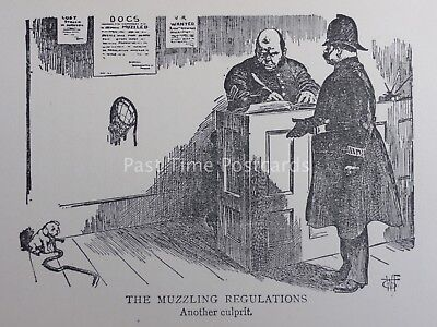 Barrister Law Wig & Gown LITTLE DOG - THE MUZZLING REGULATIONS Antique Cartoon
