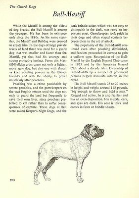 "The Bullmastiff - Vintage Dog Art Print - Matted ""G"""