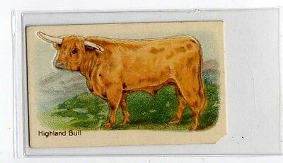 (Jb1859-100)  HUSTLER,ANIMALS 3RD SERIES,HIGHLAND BULL,1925#3