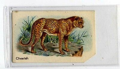 (Jb1939-100)  HUSTLER,ANIMALS 1ST SERIES,CHEETAH,1925#3
