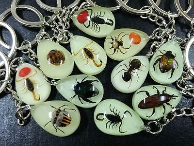 11 PCS mixed scorpion spider bug insect glow in dark drop fashion keychain
